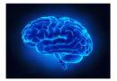 Peso corporeo e funzioni cerebrali