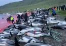 Shock e rabbia per il massacro di delfini